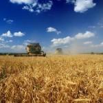 Agricultural enterprise in the Lviv region